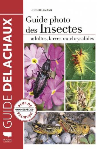 Guide photo des insectes - Adultes, larves ou chrysalides